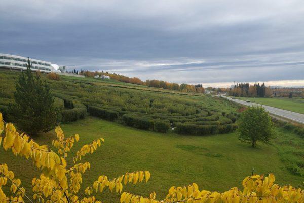 Wild Rose Hedge Maze