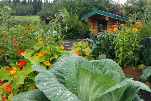 Log Cabin Vegetables